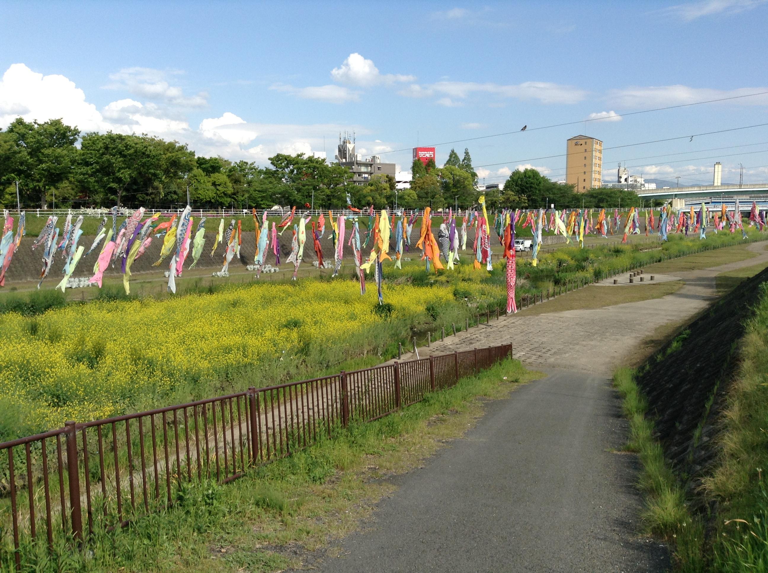 大阪の行政書士「鯉のぼり」画像