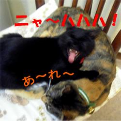 20060110poppo_ririko