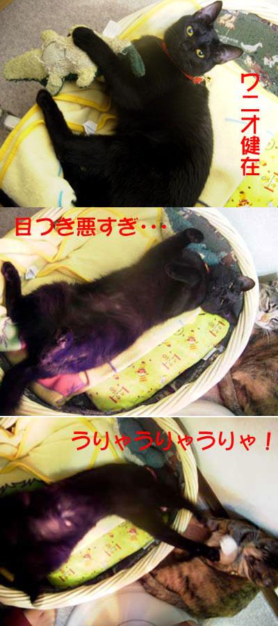 20060310riroko_2