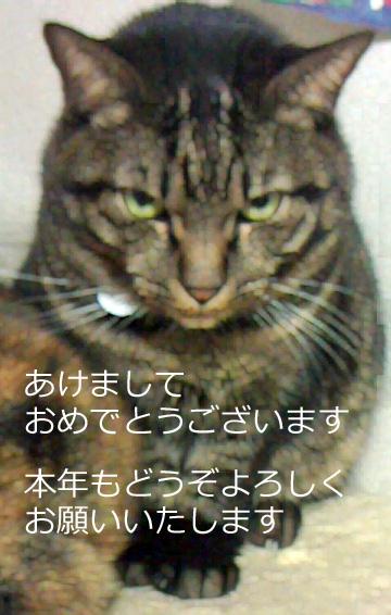 川上恵行政書士事務所あけましておめでとうございます20140101ゴンベ