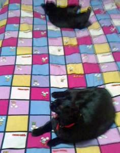 大阪の行政書士事務所2014年9月黒猫シスターズ